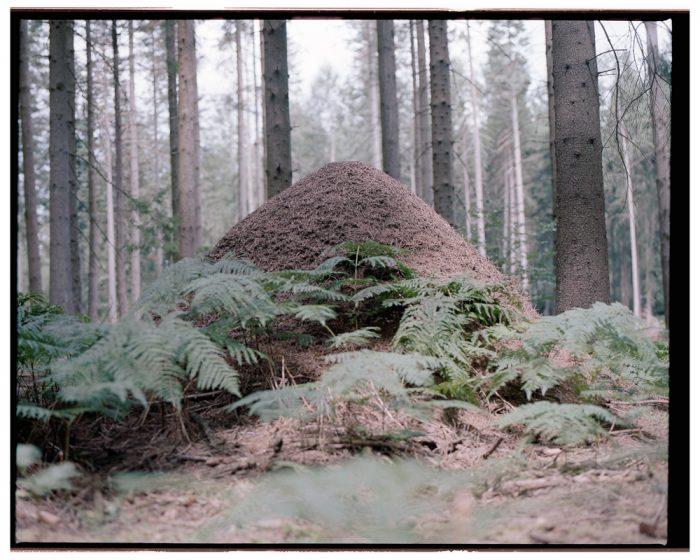 En Ardenne (11)